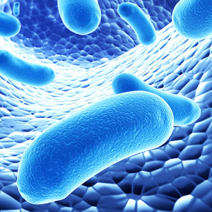 fitness dobavki Пробиотици
